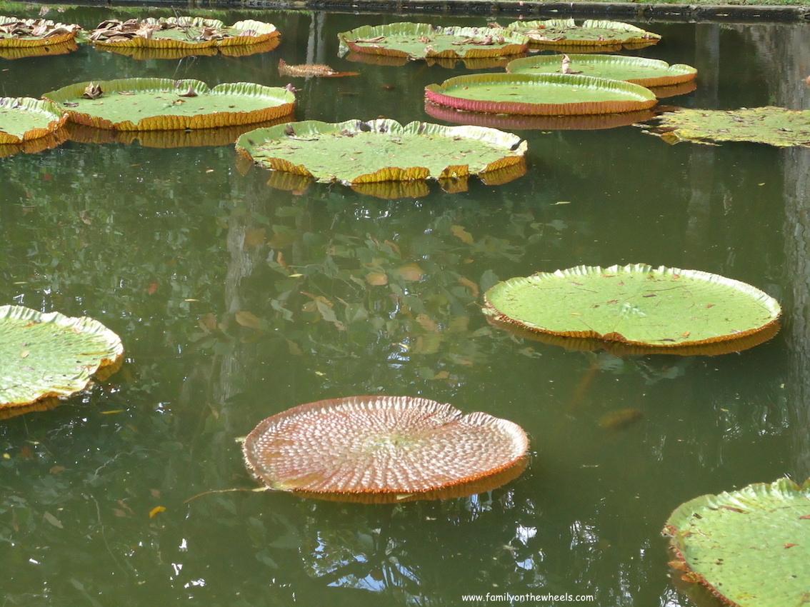 Pampelmousses Botanical Garden, Mauritius